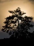 Silueta del árbol con el sol en el fondo Imágenes de archivo libres de regalías
