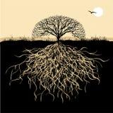Silueta del árbol con las raíces Fotos de archivo