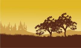 Silueta del árbol con los fondos amarillos Fotos de archivo