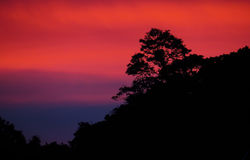 Silueta del árbol con un cielo de la puesta del sol en el fondo Fotos de archivo