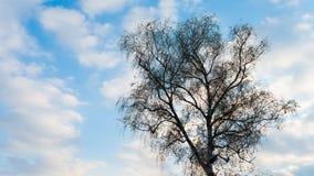 Silueta del árbol contra el cielo azul y las nubes durante puesta del sol Imagenes de archivo