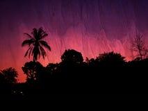 Silueta del árbol contra el cielo púrpura vivo foto de archivo libre de regalías