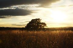 Silueta del árbol contra el cielo que pone en contraste Imagen de archivo libre de regalías