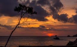 Silueta del árbol contra una puesta del sol hermosa Fotos de archivo