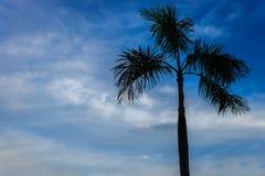 Silueta del árbol de coco imagen de archivo libre de regalías