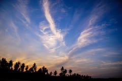 Silueta del árbol de coco Foto de archivo