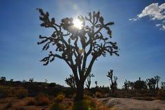 Silueta del árbol de Joshua Foto de archivo libre de regalías