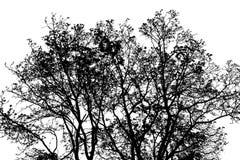 Silueta del árbol de la primavera Imagen de archivo libre de regalías