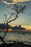 Silueta del árbol de la puesta del sol Fotografía de archivo libre de regalías