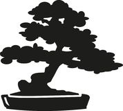 Silueta del árbol de los bonsais Fotografía de archivo