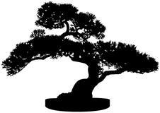 Silueta del árbol de los bonsais Imagen de archivo