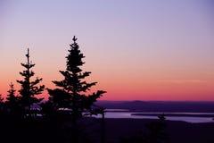 Silueta del árbol de pino en luz de la oscuridad Foto de archivo libre de regalías
