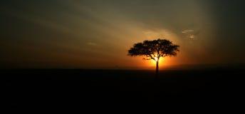 Silueta del árbol del acacia Foto de archivo libre de regalías