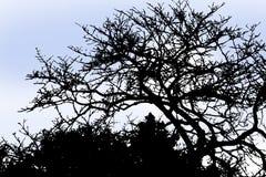 Silueta del árbol del invierno Stock de ilustración