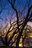 Silueta del árbol delante del lago Fotos de archivo