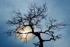 Silueta del árbol descubierto Fotos de archivo libres de regalías