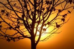 Silueta del árbol durante salida del sol Imágenes de archivo libres de regalías