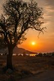 Silueta del árbol en el fondo de la puesta del sol, Aegina, Grecia Fotografía de archivo libre de regalías