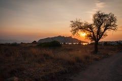 Silueta del árbol en el fondo de la puesta del sol, Aegina, Grecia Foto de archivo