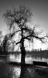 Silueta del árbol en el lago Imagenes de archivo