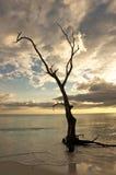 Silueta del árbol en línea de la playa Fotos de archivo