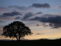 Silueta del árbol en la puesta del sol fotografía de archivo