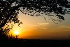 Silueta del árbol en la puesta del sol Imagenes de archivo