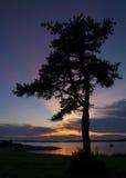 Silueta del árbol en la puesta del sol en el océano Fotos de archivo