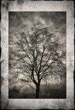 Silueta del árbol en marco Imágenes de archivo libres de regalías