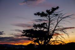 Silueta del árbol en Puget Sound Fotografía de archivo