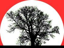 Silueta del árbol grande Fotos de archivo libres de regalías