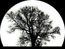Silueta del árbol grande Fotografía de archivo libre de regalías