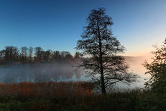 Silueta del árbol a la mañana de niebla Imágenes de archivo libres de regalías