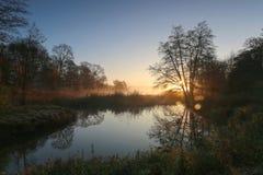 Silueta del árbol a la mañana de niebla Imagen de archivo