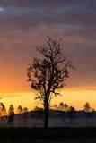 Silueta del árbol muerto Fotografía de archivo