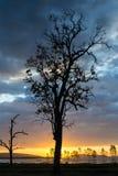 Silueta del árbol muerto Fotografía de archivo libre de regalías