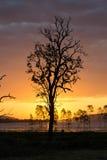Silueta del árbol muerto Fotos de archivo libres de regalías