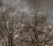 Silueta del árbol muerto Foto de archivo