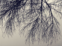 Silueta del árbol muerto Foto de archivo libre de regalías