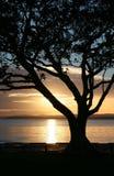 Silueta del árbol - salida del sol Foto de archivo libre de regalías