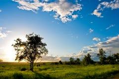 Silueta del árbol sobre el cielo azul Fotos de archivo libres de regalías