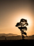 Silueta del árbol y de colinas en la puesta del sol Foto de archivo