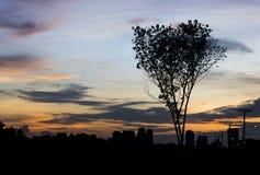 Silueta del árbol y de la ciudad imagenes de archivo