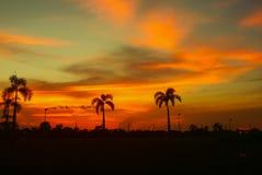 Silueta del árbol y de la puesta del sol anaranjados claros - en el paisaje hermoso del cielo en la naturaleza Imagen de archivo