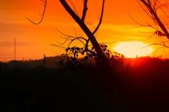 Silueta del árbol y de la rama en la puesta del sol amarillo-naranja en paisaje hermoso del cielo en la naturaleza Fotos de archivo libres de regalías