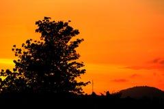 Silueta del árbol y de la rama en la puesta del sol amarillo-naranja en paisaje hermoso del cielo en la naturaleza Imagenes de archivo