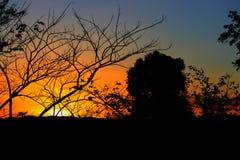 Silueta del árbol y de la rama en la puesta del sol amarillo-naranja en paisaje hermoso del cielo en la naturaleza Foto de archivo libre de regalías
