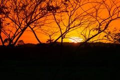 Silueta del árbol y de la rama en la puesta del sol amarillo-naranja en paisaje hermoso del cielo en la naturaleza Imagen de archivo