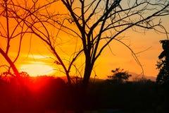 Silueta del árbol y de la rama en la puesta del sol amarillo-naranja en paisaje hermoso del cielo en la naturaleza: con el espaci Imagenes de archivo
