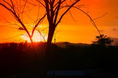 Silueta del árbol y de la rama en la puesta del sol amarillo-naranja en paisaje hermoso del cielo en la naturaleza: con el espaci Foto de archivo